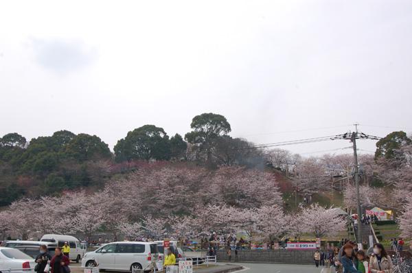 桜名所 大将陣公園