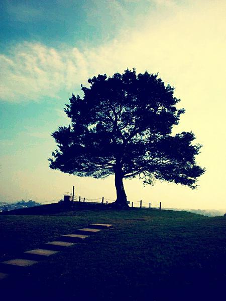 清水が丘公園 からっぽの木