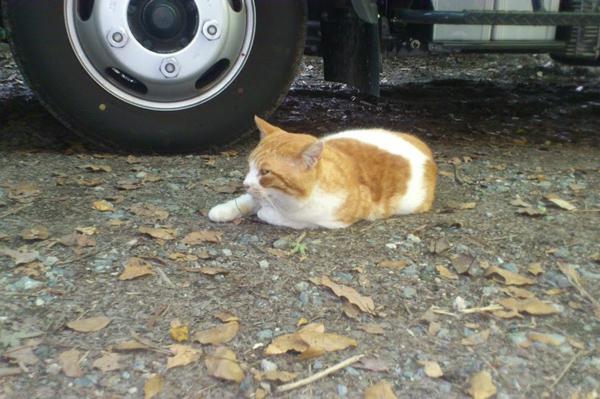 天拝山の猫